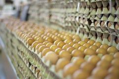 Centinaia di uova che attendono i compratori ad un servizio Immagine Stock Libera da Diritti