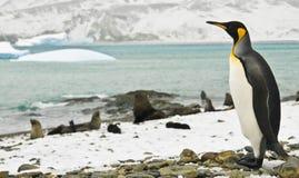 Centinela de rey pingüino Foto de archivo libre de regalías