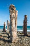 Centinelas del árbol en una playa en Marbella, España Foto de archivo libre de regalías