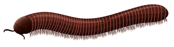Centipede. Illustration of a small millipede Royalty Free Stock Photography
