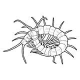 Centipede. Insect Animal Cartoon Art Stock Images