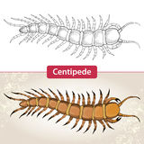 Centipede or Millipede. Isolated on white and on the textured beige background Stock Photos