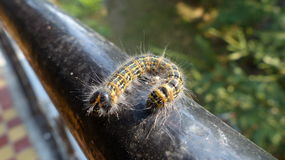 Centipede. On railing - great details Stock Photography