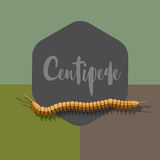 Centipede Vector Worm Royalty Free Stock Images