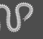 Centipede Worm Vector Royalty Free Stock Photography