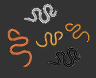 Centipede Worms. Creepy Weird Centipede Worms Insects Vector Illustration Stock Photos