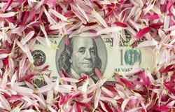 Cento banconote del dollaro Fotografia Stock Libera da Diritti