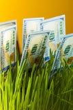 Cento banconote in dollari in erba verde Immagine Stock Libera da Diritti