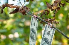 Cento banconote in dollari pesano le mollette da bucato di autunno Immagini Stock
