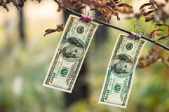 Cento banconote in dollari pesano le mollette da bucato di autunno Fotografia Stock Libera da Diritti