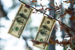 Cento banconote in dollari pesano le mollette da bucato di autunno illustrazione di stock