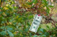 Cento banconote in dollari pesano le mollette da bucato di autunno Immagini Stock Libere da Diritti