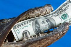 Cento dollari di banconota nella bocca dei pesci Immagini Stock