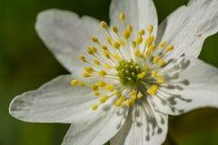 Centraal bij een bloem Royalty-vrije Stock Foto
