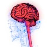 Centraal Orgaan van het Menselijke Zenuwstelsel Brain Anatomy stock illustratie