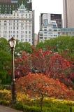 Centraal park met straatlantaarn en heldere bomen stock afbeelding