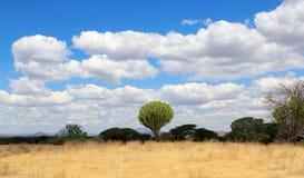 Centraalafrikaans dichtbegroeid landschap met cactus royalty-vrije stock foto's