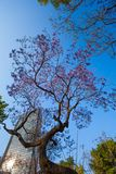 Central Alameda park purple trees and skyscraper Royalty Free Stock Images