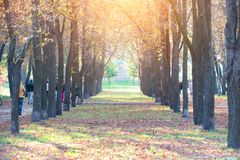 Central alley in autumn park Stock Photography