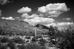 Central Arizona Desert Royalty Free Stock Photos
