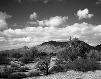 Central Arizona Desert Royalty Free Stock Photography