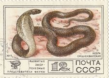 Central Asian cobra. Soviet postage stamp `Central Asian cobra royalty free stock photography