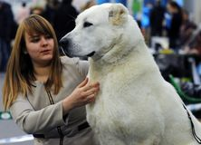 Lovely animals at the dog show stock image