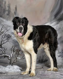 Central asiatisk herde Dog Royaltyfria Bilder