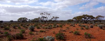 Central Australia Scene Royalty Free Stock Photo