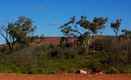 Central Australia Scene Royalty Free Stock Image