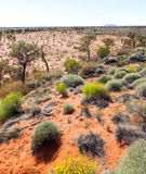 Central australia scene Royalty Free Stock Images