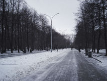 Central avenue in the park.  November. Beginning of winter Royalty Free Stock Photos