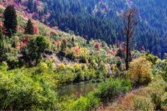 Central California de los árboles del otoño fotos de archivo libres de regalías
