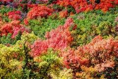 Central California de los árboles del otoño imagenes de archivo