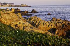 California Rocky Coast, Monterey. Central California with ice plant in the foreground and some seaside houses in the distance Royalty Free Stock Photography