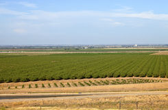 Central California orchards. Stock Image