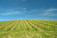 Central California Wine Country Stock Photography
