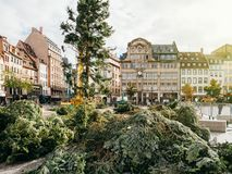 Central Christmas Tree Install in Place Kleber. STRASBOURG, FRANCE - OCT 30, 2017: Fir branches ready for Strasbourg Christmas Tree Install in central Place Stock Images