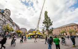 Central Christmas Tree Install in Place Kleber. STRASBOURG, FRANCE - OCT 30, 2017: Male couple looking at the Strasbourg Christmas Tree Install in central Place Royalty Free Stock Photo