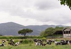 Central dairy Stock Photos