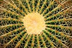 Central de cactus Images libres de droits