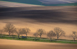 Central Europe. A black car rides among a multicolored hilly field. Landscape with a shiny black car, multi-colored plowed field a. Nd tree alley. The plot with royalty free stock photo