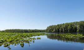 Central Florida lake Royalty Free Stock Images