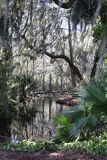 Central Florida Swamp with Palms and Vines. Lush scenery with water and plants Stock Photography
