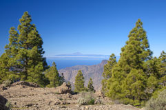 Central Gran Canaria in February Royalty Free Stock Image