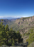 Central Gran Canaria in January Stock Image