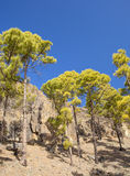 Central Gran Canaria Royalty Free Stock Photography