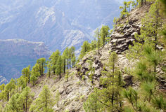 Central Gran Canaria Royalty Free Stock Images