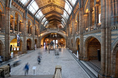 Central Hall of the Natural History Museum, London Stock Photos