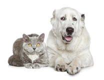 central hundherde för asiatisk härlig katt arkivbilder